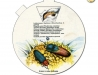 Brouci a jejich larvy