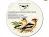 Naši pěnkavovití ptáci
