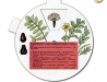 Zavlečené plevely a jejich plody