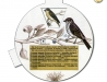 Strnadi - samci a samice